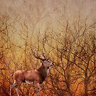 Stag deer by shalisa