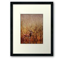 Stag deer Framed Print