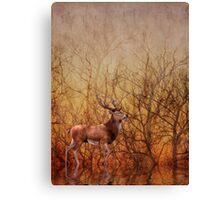 Stag deer Canvas Print