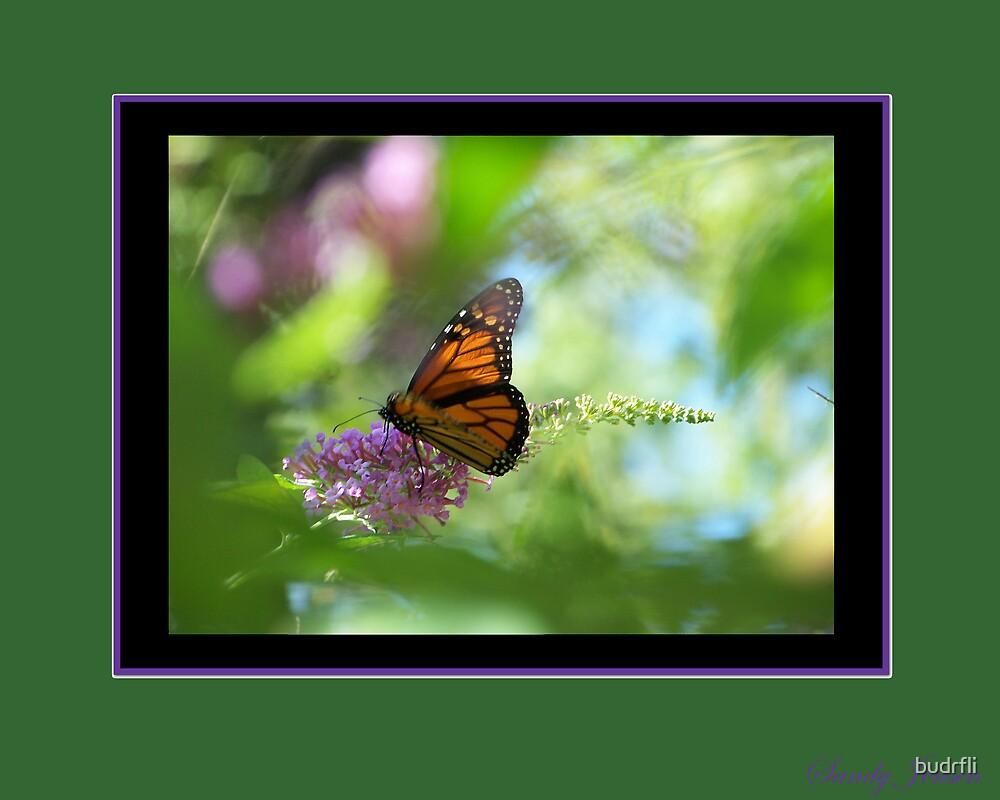 monarch illusion by budrfli