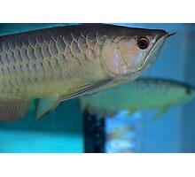 Like a Fish in Water - Kuala Lumpur, Malaysia. Photographic Print