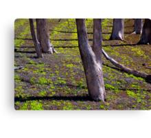 Lake Nillahcootie Canvas Print