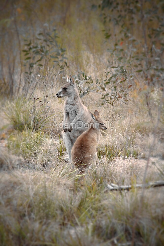 Girraween by AdamDonnelly