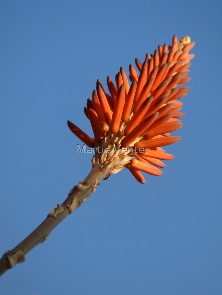 Winter Flame by Martie Venter