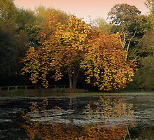 the old conker tree  by sully