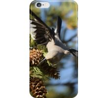Clark's Nutcracker at Mammoth Hot Springs iPhone Case/Skin