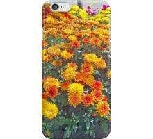 Beautiful Fall Chrysanthemums  iPhone Case/Skin