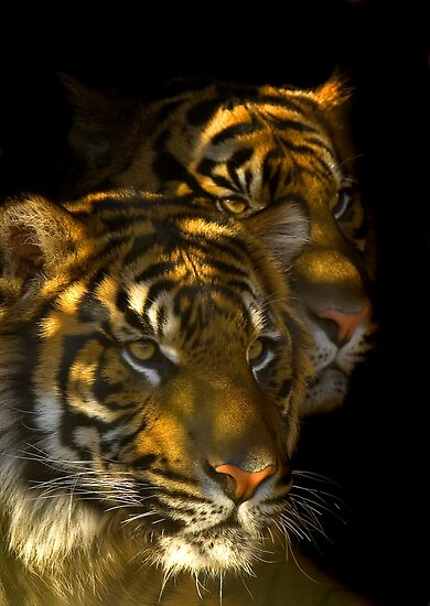 In the shadows by Mundy Hackett