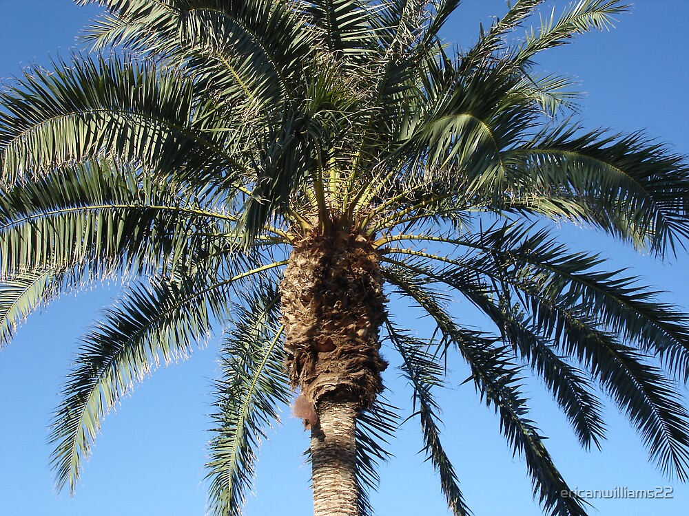 Palm Tree by ericanwilliams22