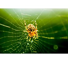 Macro Shot Cute Spider Photographic Print