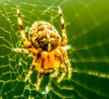 Macro Shot Cute Spider Sticker