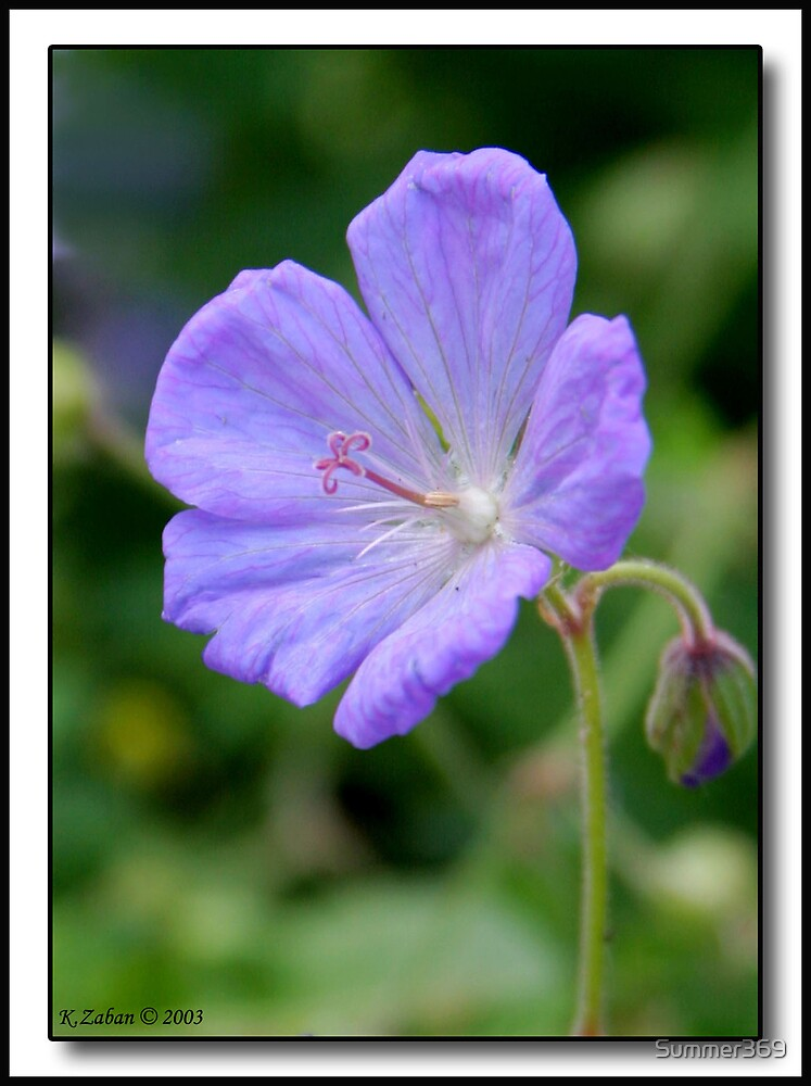 Small Purple Flower by Summer369