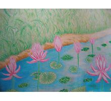 Lily in the Stream Photographic Print