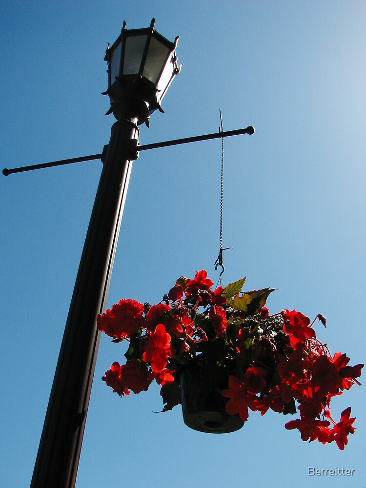 Hanging Garden by Berreitter