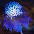 Ethereal Phosphorescence by Susan Werby