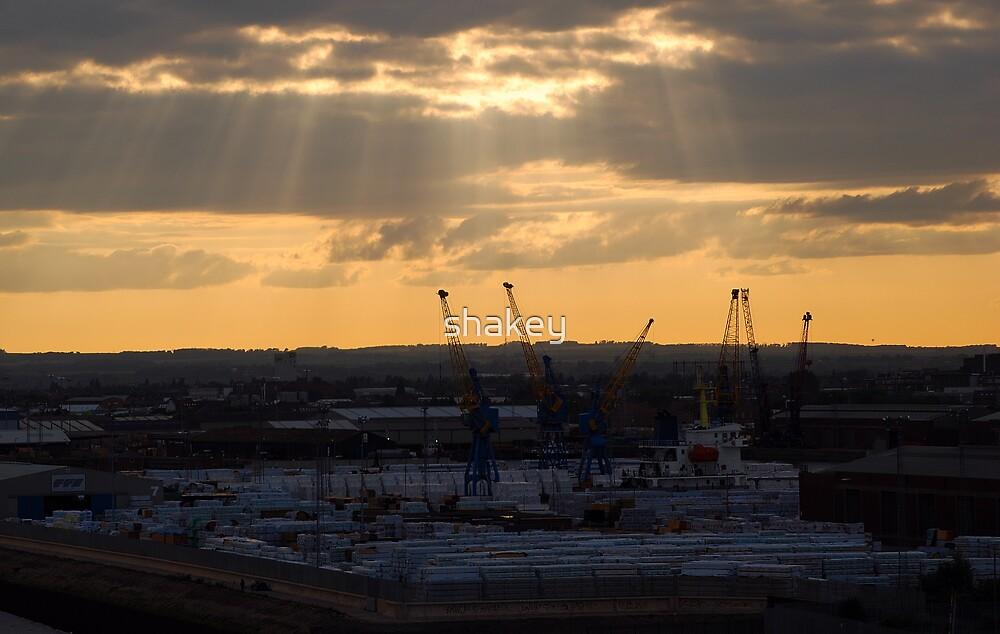 Cranes at dusk by shakey