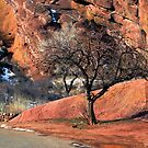 Red Rocks One Tree Hill by John  De Bord Photography