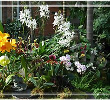Group Of Orchids by Kathleen Struckle