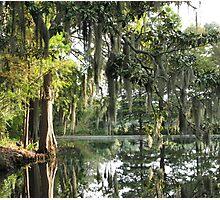 Charleston Moss Photographic Print
