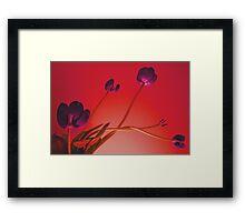 Stems & Stamens Framed Print