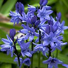 Artistic English Bluebells by Violaman
