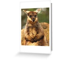 What You Looking At ? Greeting Card