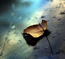 Winter Leaf  - www.canvasmyphotos.net by GetCarter