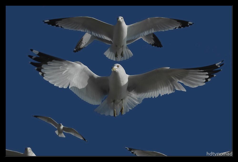 Gulls by hdtvnomad