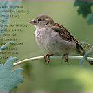 Bird song by snowbird