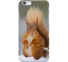 Red squirrel in winter iPhone Case/Skin