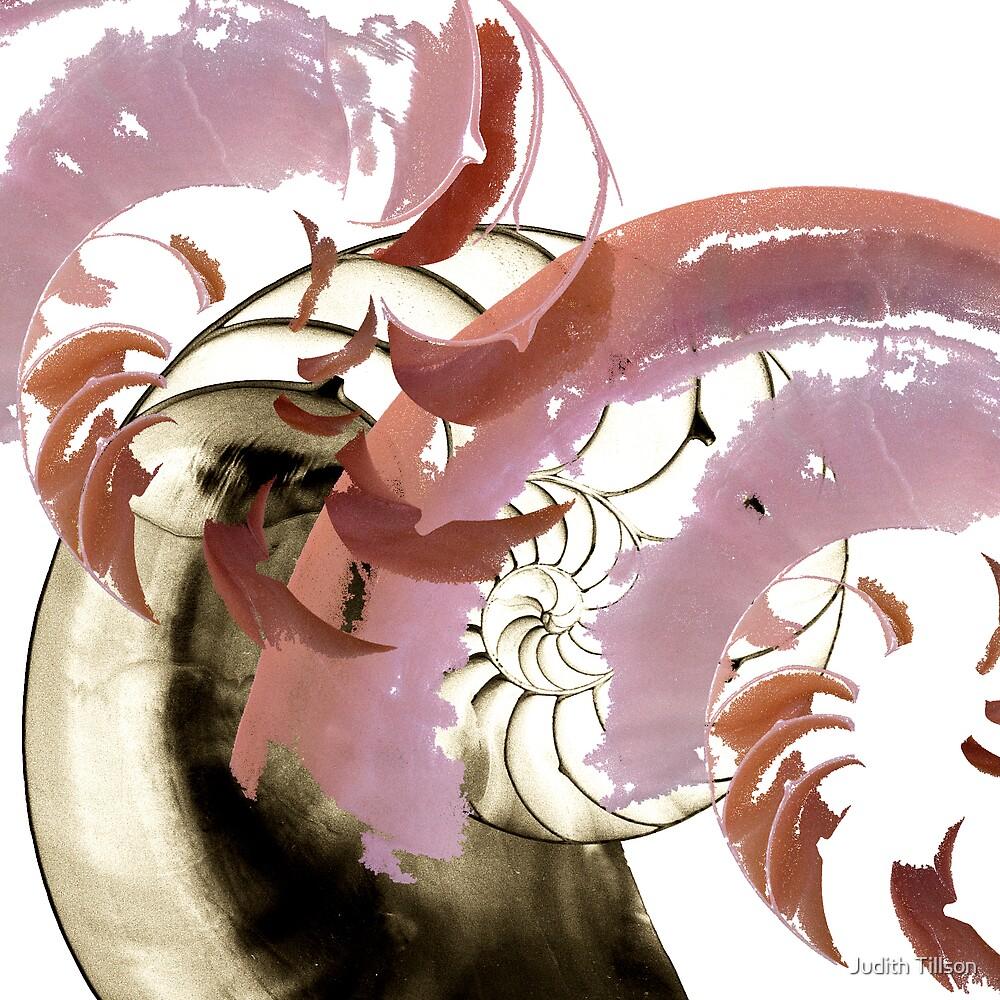 Nautilus abstract by Judith Tillson