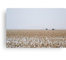 Cows in a Cornfield during Snowstorm Canvas Print