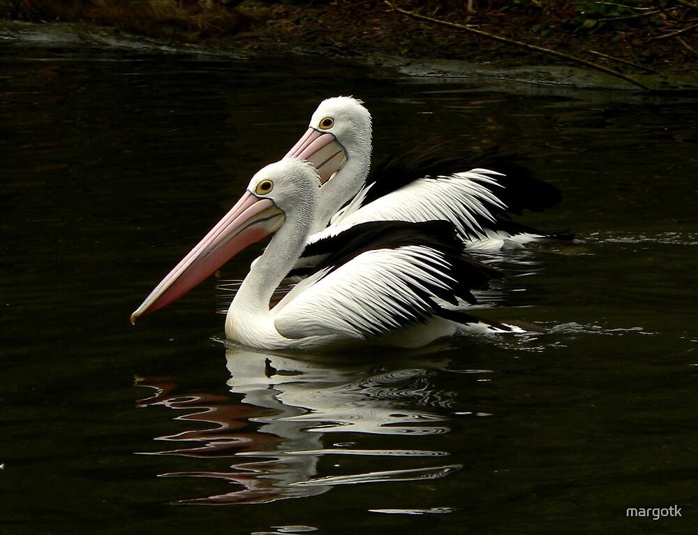 Pelicans by margotk