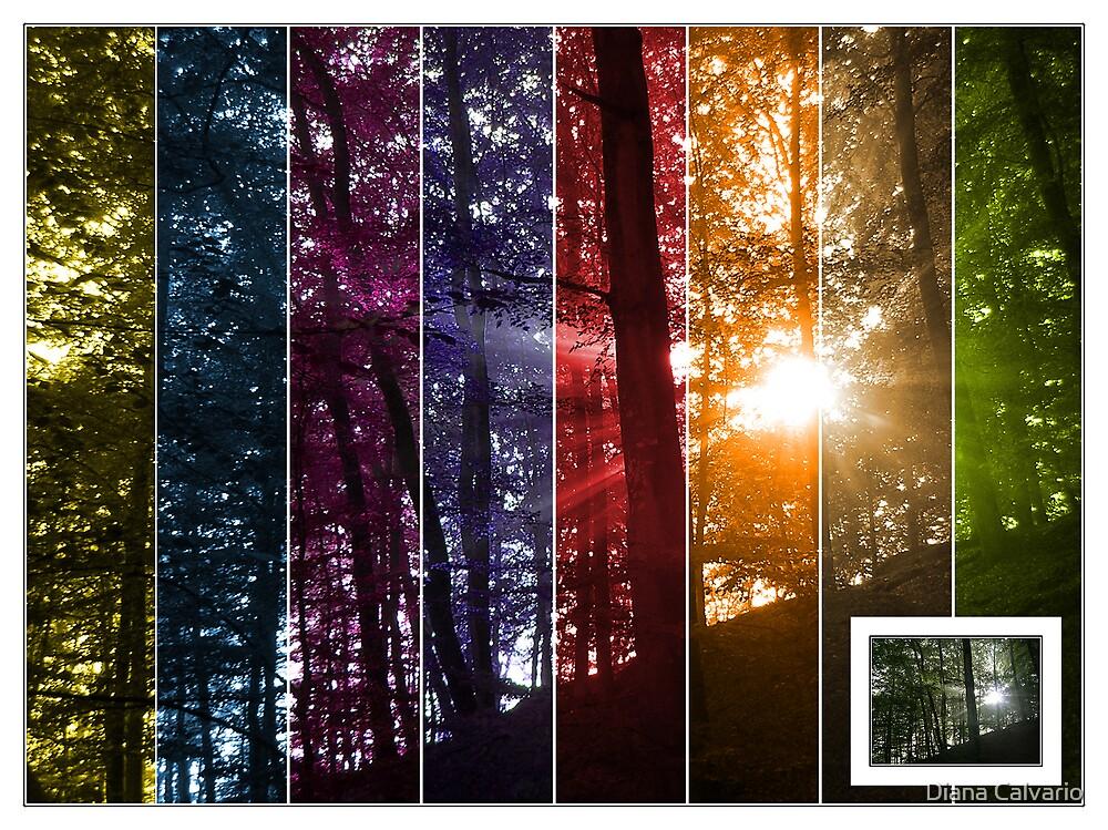 the 8 seasons by Diana Calvario