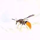 Wasp Exposed by tapperboy