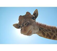 Giraffe Sunlight Photographic Print