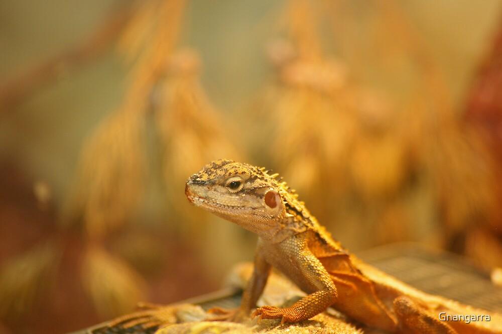 Dragon on watch by Gnangarra