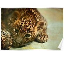 Baby Leopard Poster
