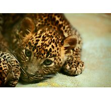 Baby Leopard Photographic Print