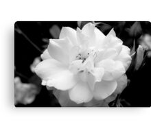 Rose in B&W  - Calendar Image Canvas Print