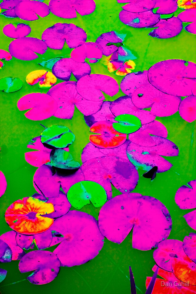 Series: Saturated Lily Pads II by Dan Cahill