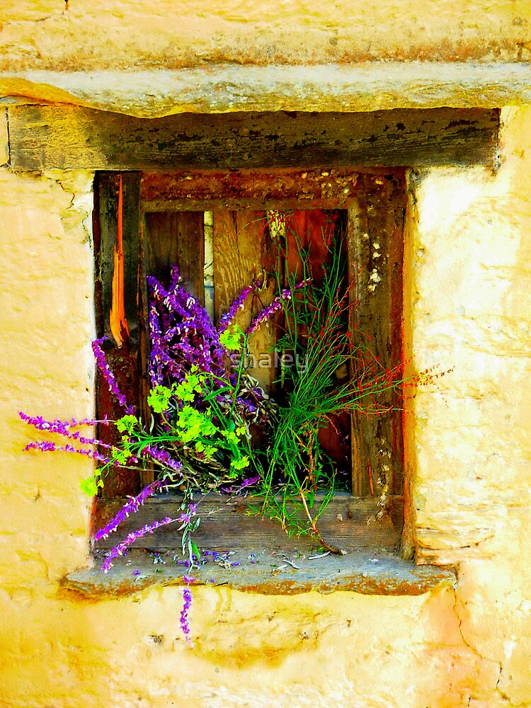 Window Box 1 by shaley