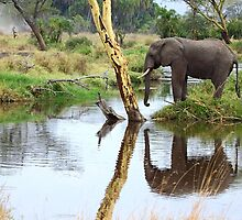 African Elephant, Serengeti National Park, Tanzania by Carole-Anne