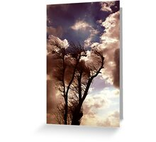 Windtree Greeting Card