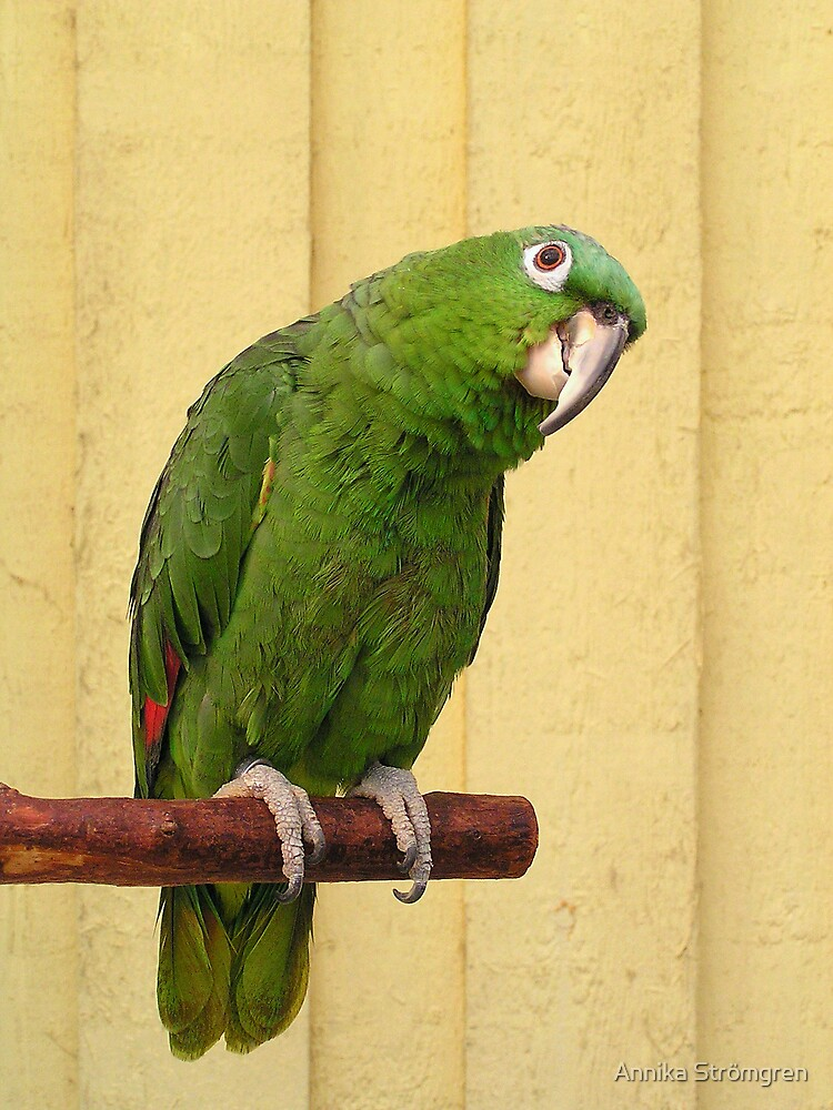 Parrot portrait by Annika Strömgren