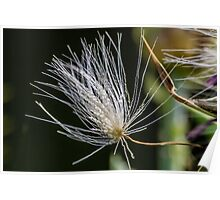 Thistle Seed Poster