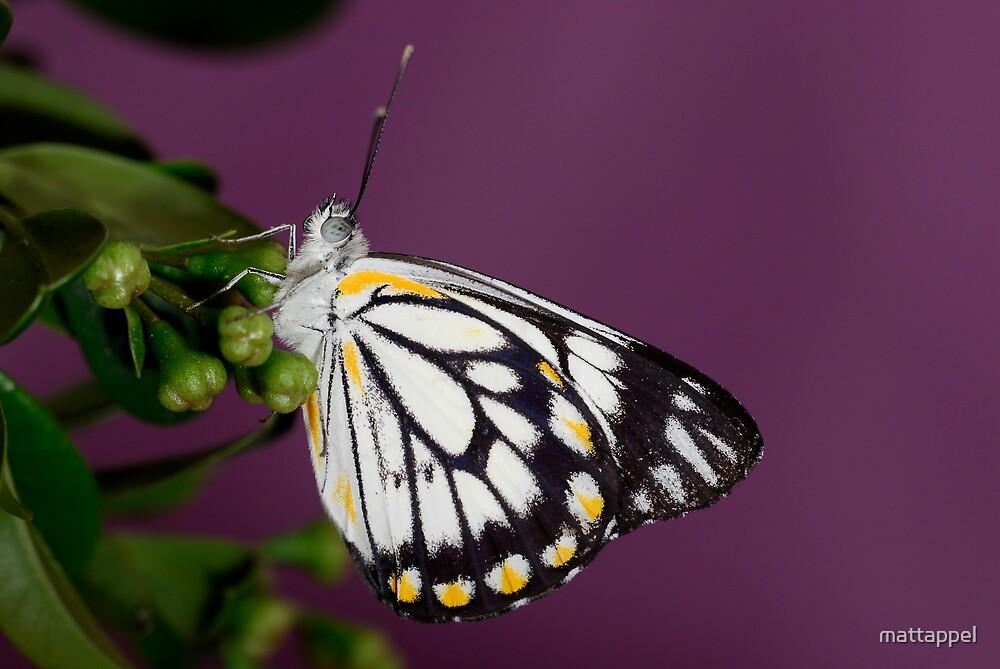 Butterfly by mattappel