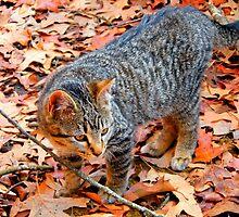 Autumn Kitty by WildestArt