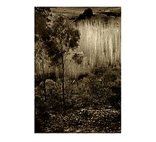 Poplars near Vaughan Photographic Print