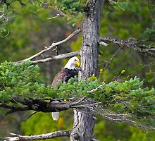Looking For Lunch by Randy Giesbrecht